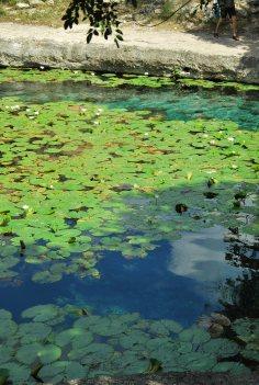 Cenote de Xlacah - Dzibilchaltun (17)