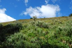 Day 1 : Puerto Williams - Cerro Bandera - Laguna del Salto (5fev12)