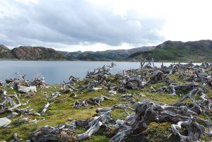 Dientes de Navarino trek, Isla Navarino, Chile