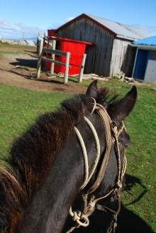 hoseback-riding to Dorotea Mirador (18mar12)