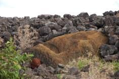 fallen Moai at Ahu Tepeu