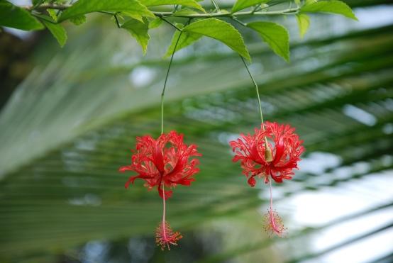 Tortuguero flowers, Costa Rica