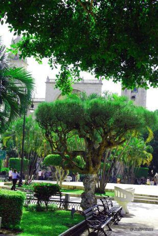 Main Plaza Park, Merida, Mexico