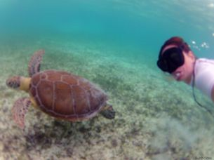 diving with a turtle, Akumal, Mexico