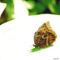 butterfly, Xcaret, Playa del Carmen, Mexico