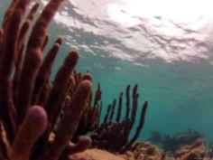 corals, Akumal, Mexico