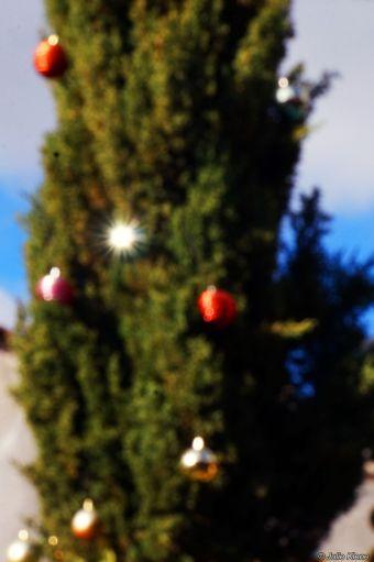 San Cristobal tree, bokeh