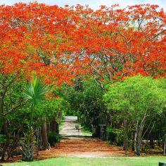 red Mayapan, Mexico