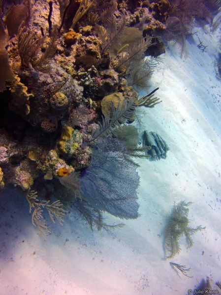 marine life, Belize