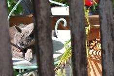 cat's fun, Aix-en-Provence, France