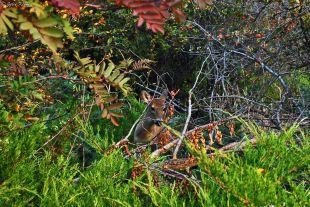 deer in Missoula, MT, USA