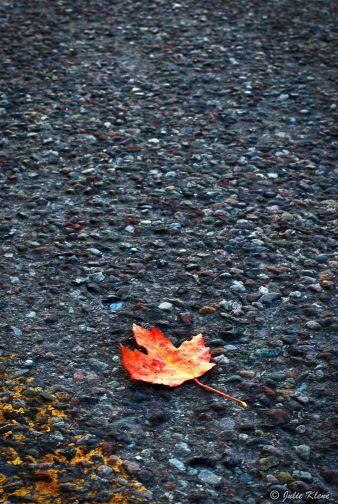 autumn in Missoula, MT, USA