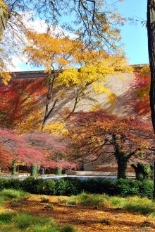 fall colors, Chicago, IL, USA