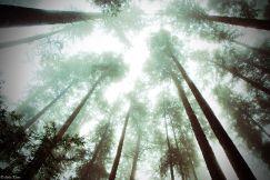Rainforest, La Push, WA, USA