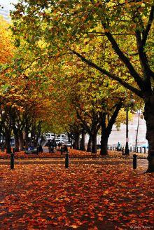 Seattle fall, WA, USA