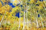 Upper Piney River Trail, CO, USA