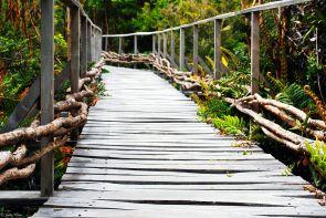 Chiloe Nat. Park, Chile