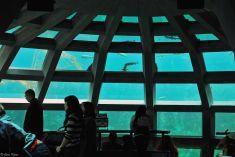 Seattle Aquarium, WA, USA