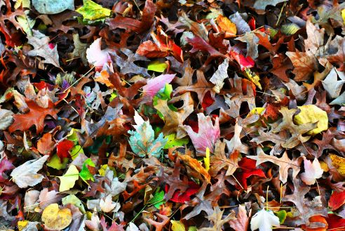 Fall @ Washington Sq. Park, NYC, USA