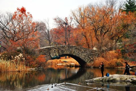 The Pond in Central Park, NYC, USA