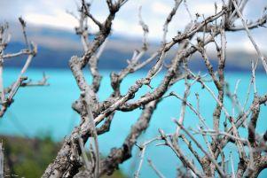 overlooking Lake Pehoe, TdP, Chile