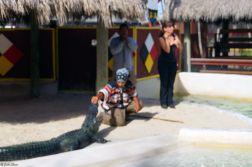 interpreting in the alligator ring, Everglades, Miami, FL, USA