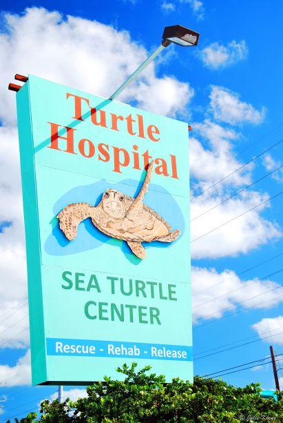 Turtle Hospital, Marathon, FL, USA