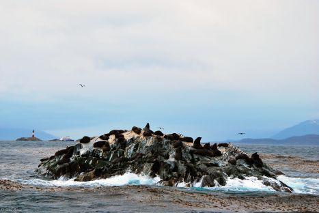 sea lion island, Ushuaia, Argentina