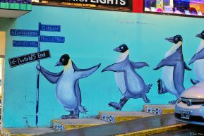 Ushuaia penguins, Argentina
