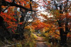 Fall in El Chaltén, Argentina
