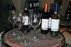 Wine-tasting, San Rafael, Argentina