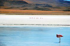 Laguna Hedionda, Uyuni Salt Flats, Bolivia