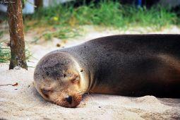 sea lion, Galapagos islands, Ecuador