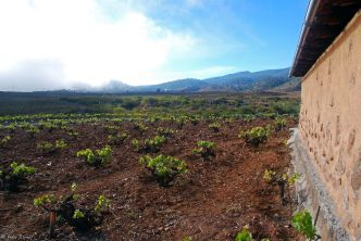 Wine-tasting in Villaflores, Tenerife, Canary Islands