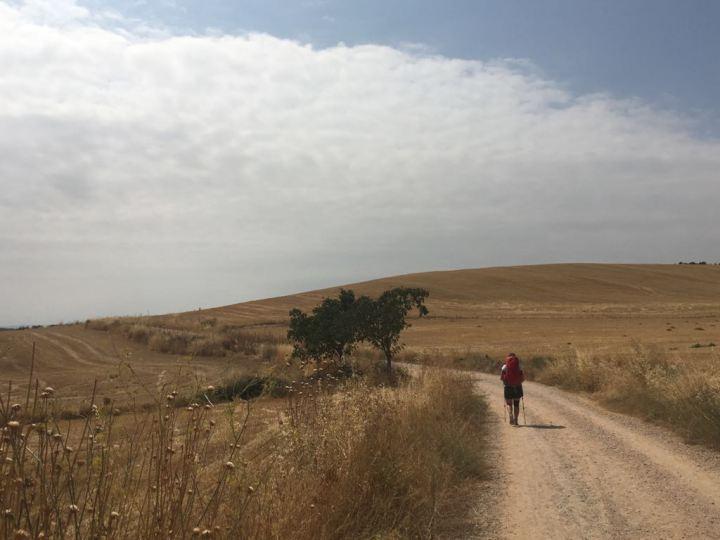 El Camino Day 10, to Los Arcos, Sapin