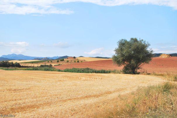 El Camino - Day 10, to Los Arcos, Spain