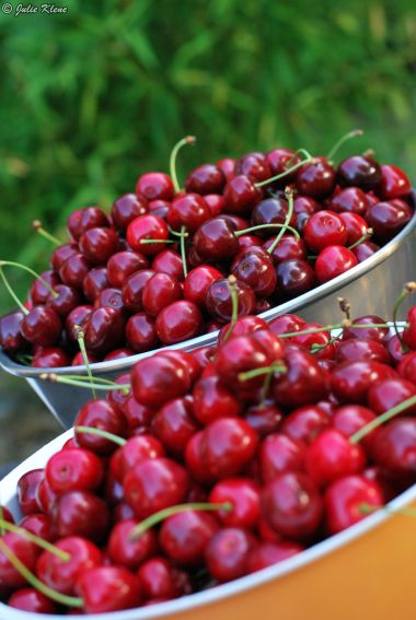 Cherry time, Normandy, France