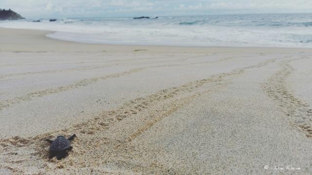 Sea Turtle Camp Vive Mar, Playa Bacocho, Puerto Escondido, Mexico