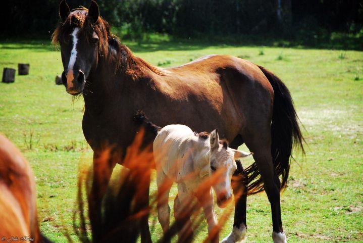 La Légende de Tara: Reconnexion avec soi-m'aime grâce aux chevaux, en LSF et/oufrançais
