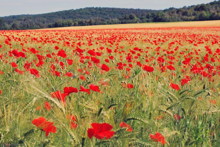 Au hasard de la Normandie : randonner en Forêt de Lyons et quelque part sur leGR2