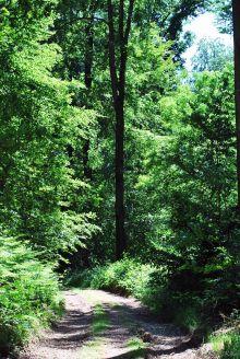 Forêt de Lyons, Normandie, France