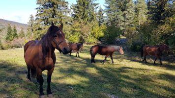 rando à cheval, Lans-en-Vercors, France